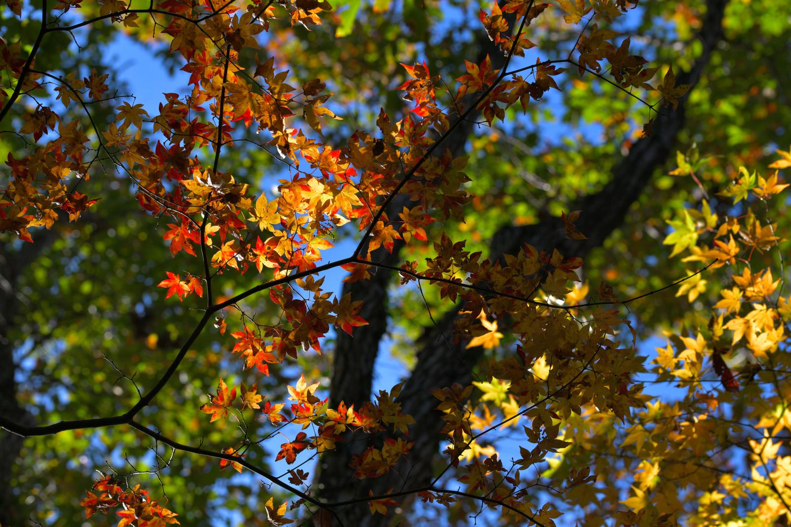 【○○の秋!】MOTTERUアイテムで自分なりの秋を楽しもう